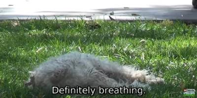 草の上に寝る犬