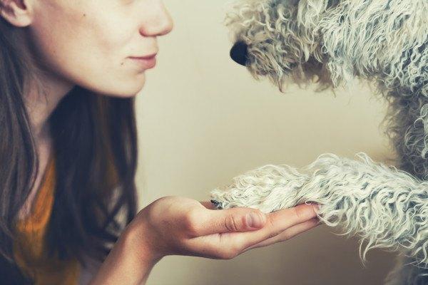 女性と手を合わせる犬