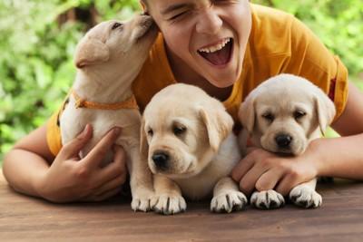 少年の耳を舐めるラブラドール・レトリーバーの子犬