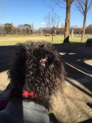 エマさんと初めての公園