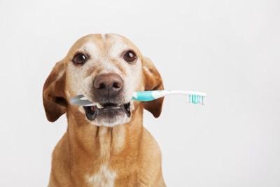歯ブラシを口にくわえた犬