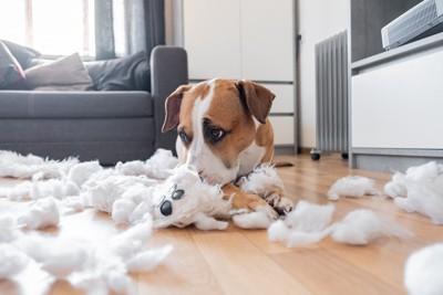 ぬいぐるみの綿をだしてしまった犬