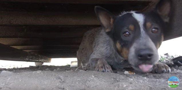 ゴミ収集容器の下にいる犬