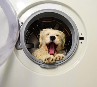 洗濯機から犬
