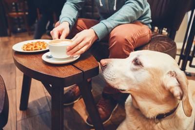 コーヒーを楽しむ飼い主を見る犬