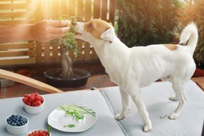 野菜を食べる犬