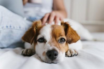 女性に体をくっつけてくつろぐ犬