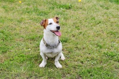芝生の上で座り込む犬