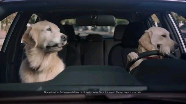 2匹の犬(車内)