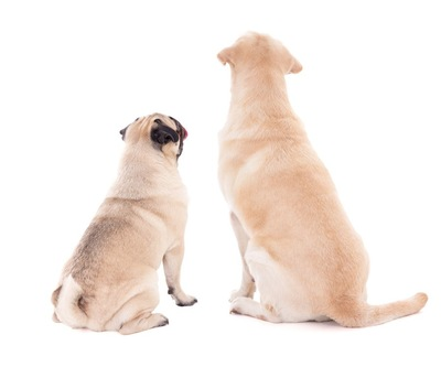 背中を向けて座る2匹の犬