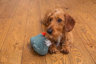 壊れたおもちゃと犬