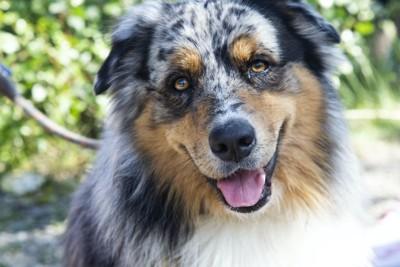 笑顔で首を傾げる犬