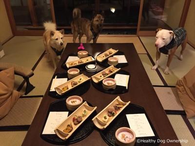 ご飯を目の前にしている犬達