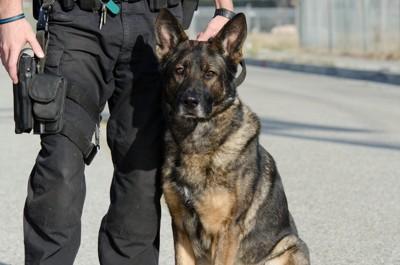 警察官と警察犬