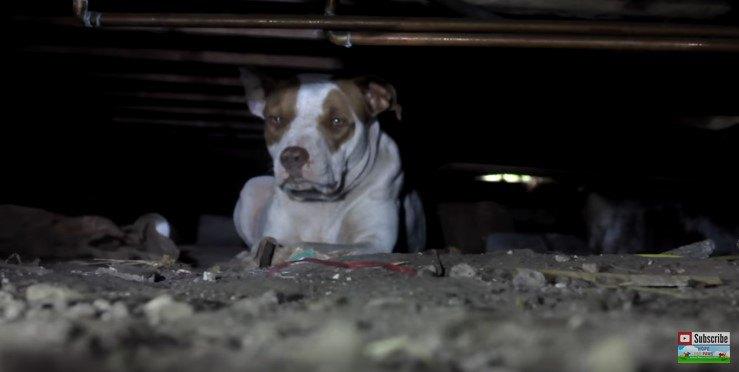 建物の下に隠れた犬