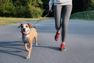 道路を一緒に走る女性と犬