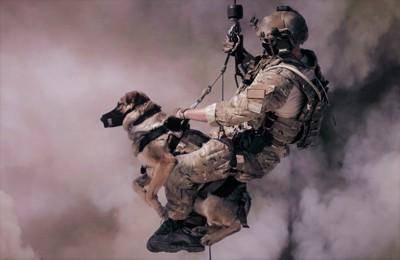 消防士に救助される犬