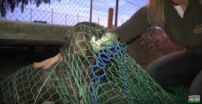 網にかかった犬