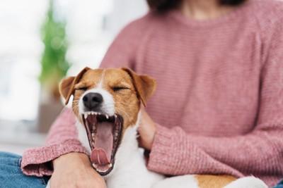 撫でられてあくびする犬