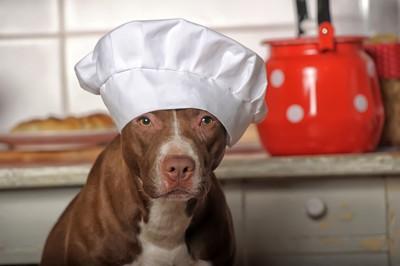 コックさんの帽子をかぶった犬