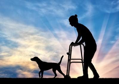 犬と歩行器の女性のシルエット