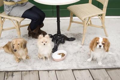 椅子に座る飼い主の足元にいる三匹の犬
