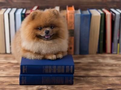 本の上に乗っている犬