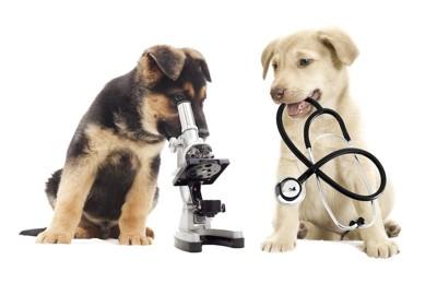 顕微鏡を覗く子犬と聴診器を咥える子犬