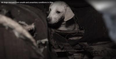 アームチェアの穴から出てきた犬