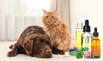 アロマオイルの入った瓶のそばで寄り添う犬と猫