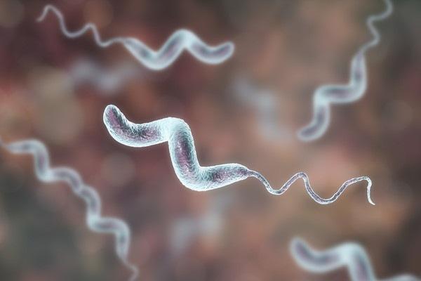 カンピロバクター菌