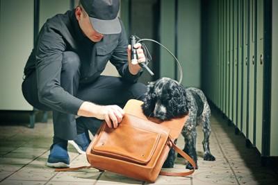 ハンドラーと一緒に仕事をする探知犬
