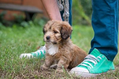 足の間に座る子犬