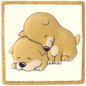 2匹の寝る犬