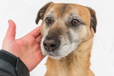 飼い主に頬を撫でられる犬