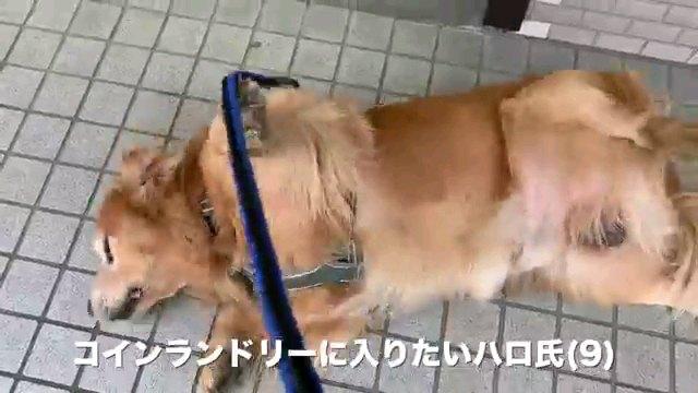 コインランドリー~字幕