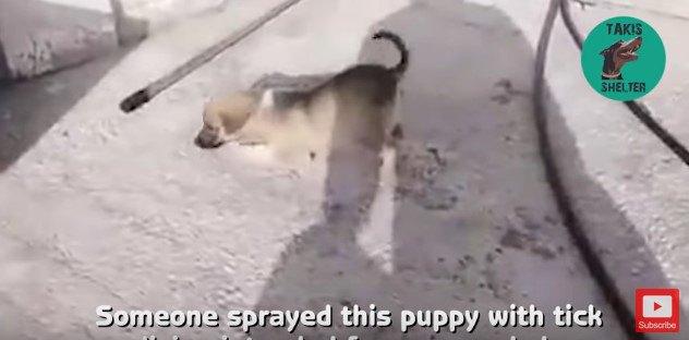 地面をはう子犬