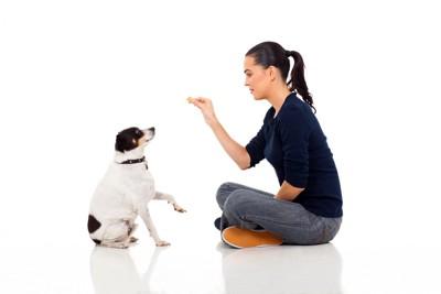 飼い主とトレーニングする犬