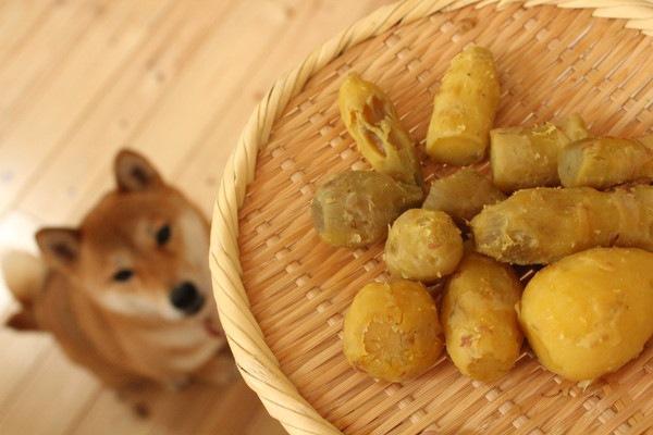 犬と食べ物