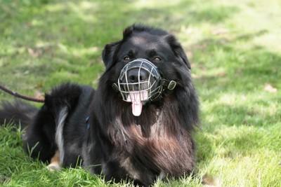 口輪をつけた黒い犬