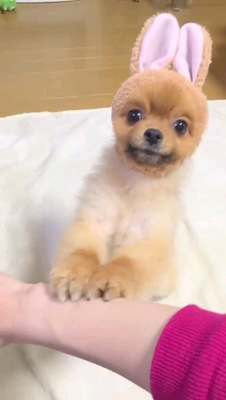 両手乗せる茶色い犬