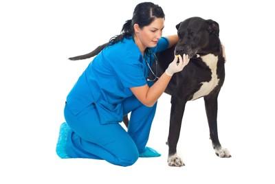 薬を与えられる黒い大型犬