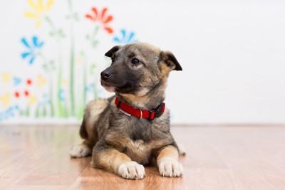 首輪をつけている子犬