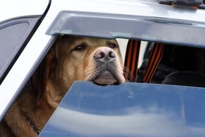 窓から鼻を出す犬