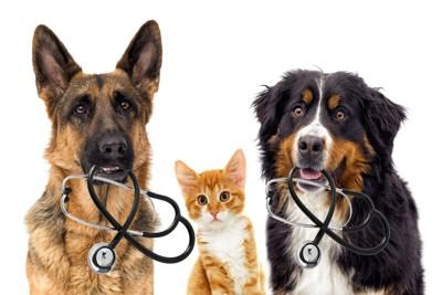 聴診器を咥えた犬2匹と子猫