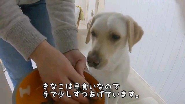 きなこは~字幕