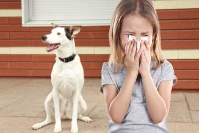 鼻をかむ女の子と白い犬