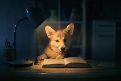 暗がりの中で照明をつけて本を読む犬