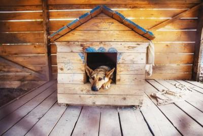 ひとりで犬小屋に入る犬