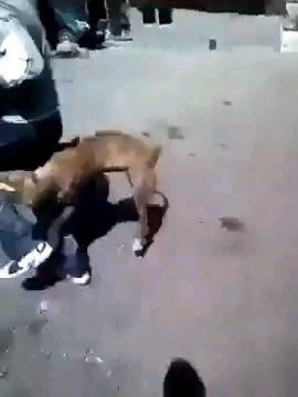 男性に噛みつく犬